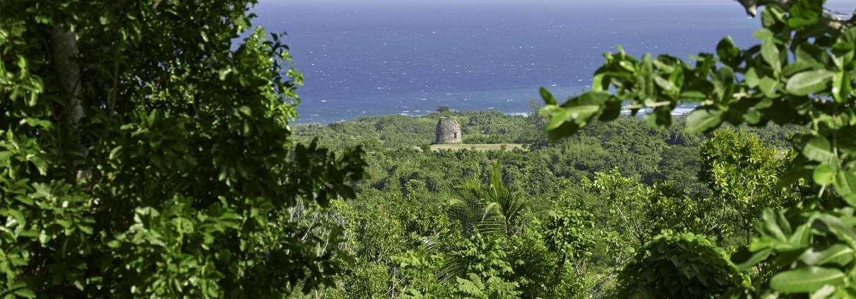 Green Castle Birding in Jamaica