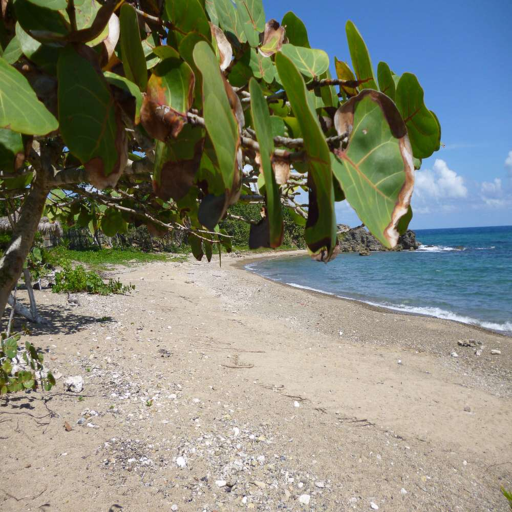 Jack's Bay Beach Jamaica
