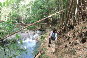 Hiking in Jamaica, Guided Tour along the Mayfield Falls Trail organised by Green Castle Estate Hotel St Marys